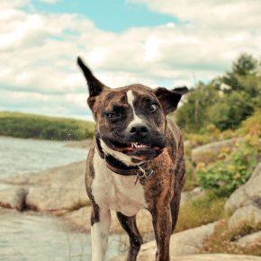 Как завести собаку: 4 популярных породы собак.
