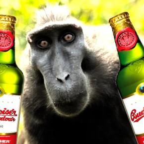 Как животные научились гнать брагу, да и вообще, про алкоголизм в мире зверушек.