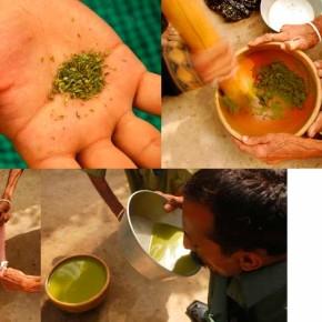 """Простой рецепт """"Бханг-ласси"""" - национального алкогольного напитка Индии с выжимкой из марихуаны."""
