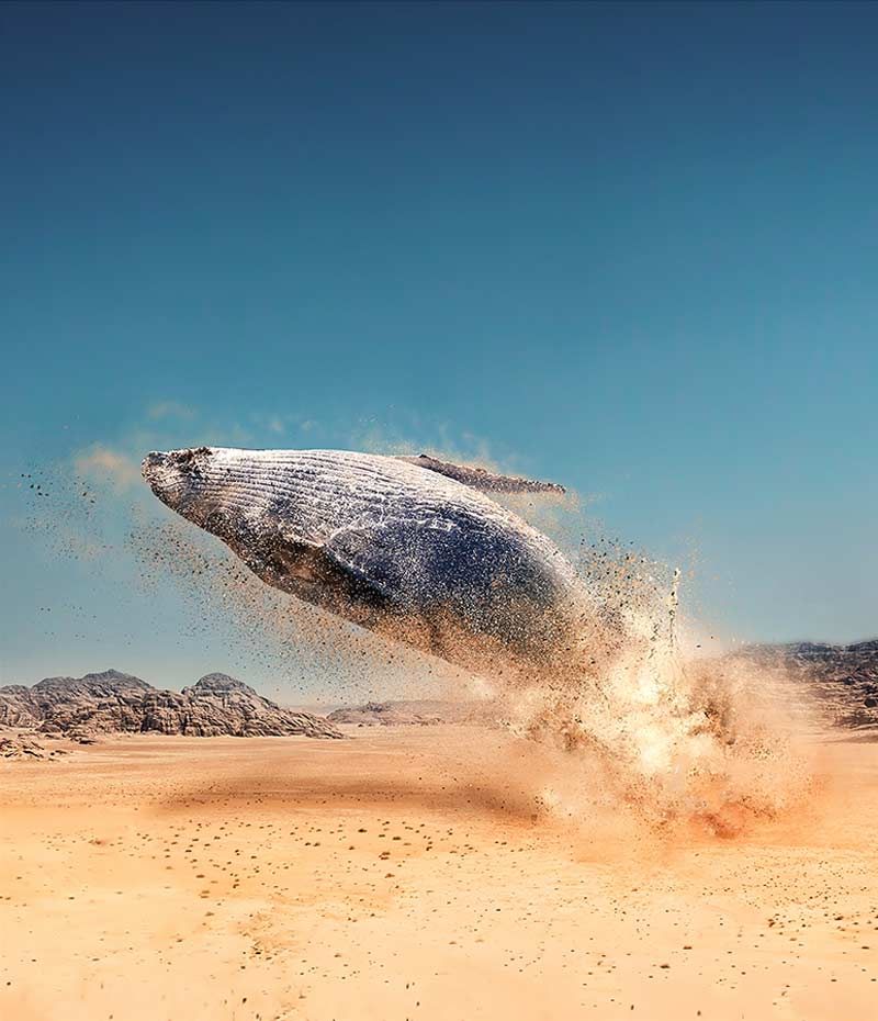 Потусторонний мир в психоделических фотографиях Хусейна Шахина