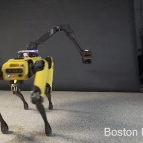 Это самый эпатажный танец, на который только способен робот-пес